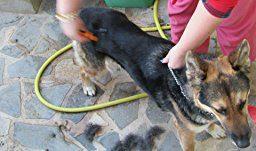 Spazzola professionale per cani