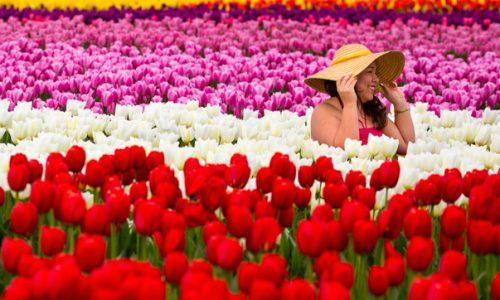 Equinozio di primavera, qual'è il suo significato e le tradizioni